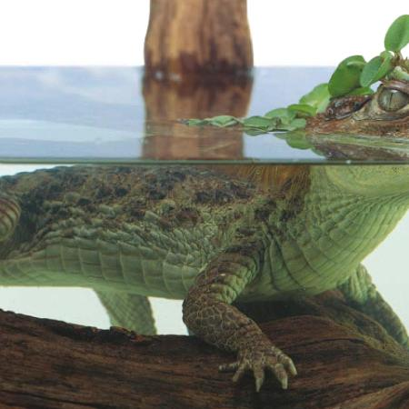 Reptiles Dk Look Closer